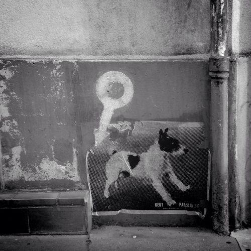 To Meditate Le chien est le symbole de la fidélité, mais nous le tenons en laisse. / The dog is a symbol of fidelity, but we have him on a leash. Streetphotography Blackandwhite Street Art