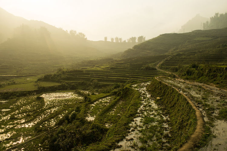 Puddles Rice Paddy Sapa Sapa, Vietnam Travel Agriculture Beauty In Nature Day Field Growth High Angle View Landscape Mist Mountain Nature No People Outdoors Rural Scene Scenics Sky Sunset Terraced Field Tranquil Scene Tranquility Tree