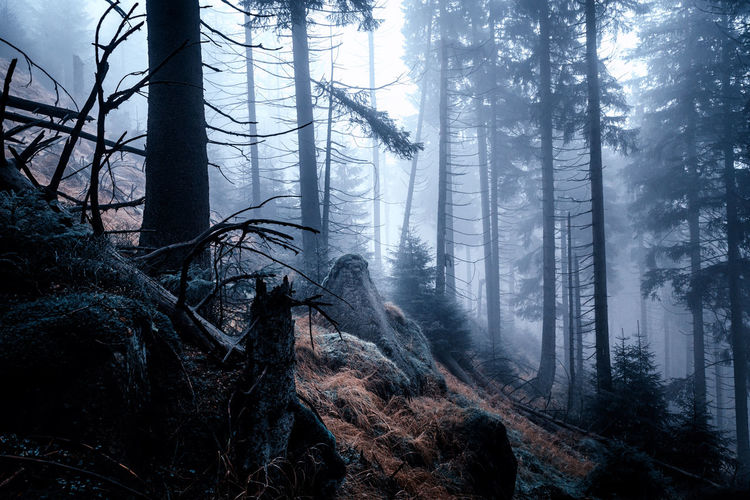 Tree Forest Land Tree Trunk Plant Trunk WoodLand Nature Scenics - Nature Environment Tranquil Scene Beauty In Nature Non-urban Scene No People Tranquility Fog Day Landscape Growth Coniferous Tree Foggy Foggy Morning Harz Harzmountains