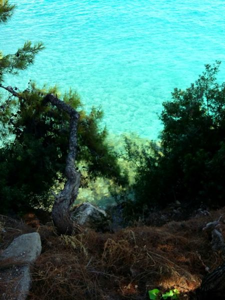 Water Nature Sea Trees And Water Tranquility Day No People Outdoors Beauty In Nature Tranquil Scene Water And Nature Idyllic Blue Water And Woods Summer Tourism Nature Purity Agistri Exploring Greece Exploring Nature Perspectives On Nature