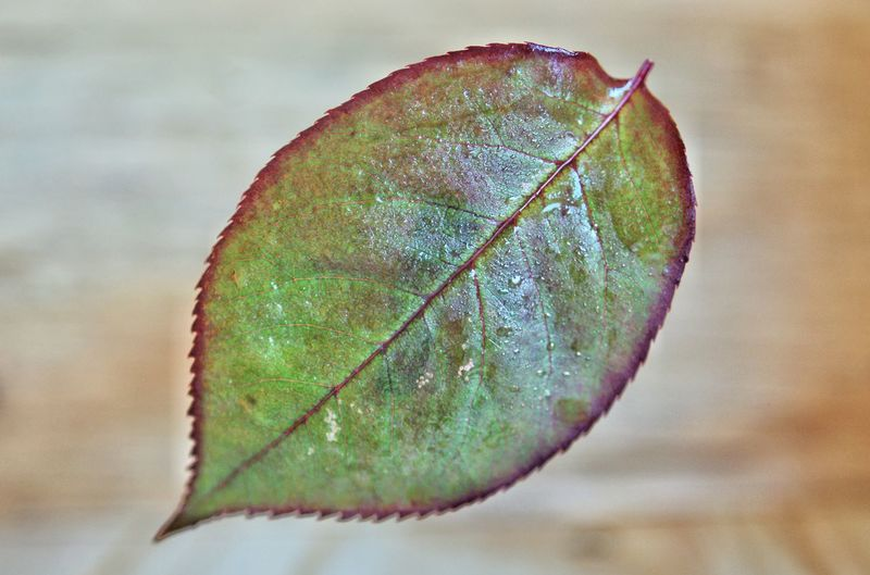 Close-up of dry leaf on plant