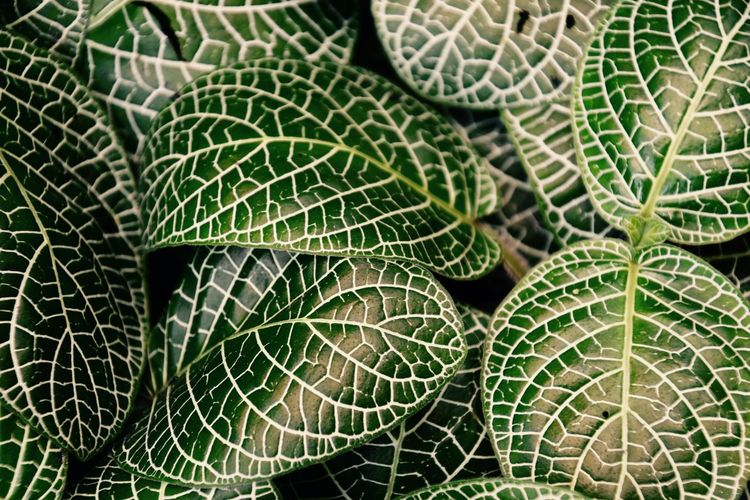 Detail Shot Of Green Leaves