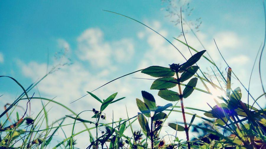 Grass Lens Flare Sun Reflection Sky first eyeem photo Moto X Play