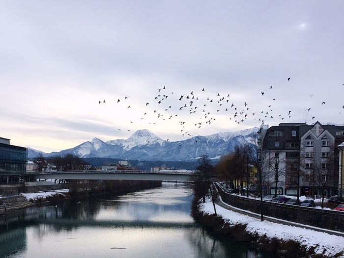 Capture The Moment Flying Bird Flock Of Birds Large Group Of Animals Animal Themes Mountain Animals In The Wild Sky Snow Migrating Animal Wildlife Nature Winter Building Exterior Architecture No People House Cloud - Sky Scenics Mid-air Shades Of Winter