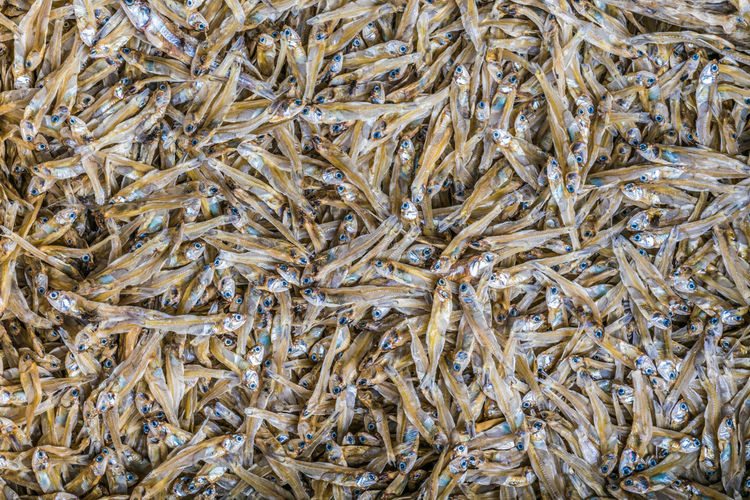 Full frame shot of dry fish for sale