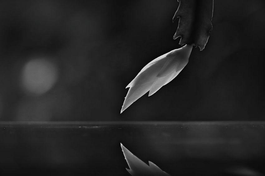 silence… Bud Reflection Flower Flower Head EyeEm Best Shots EyeEm Nature Lover EyeEm Gallery EyeEmBestPics Black And White Blackandwhite Monochrome monochrome photography Monochrome _ Collection Eyeem4photography EyeEm Best Shots - Nature Nature Nature_collection Nature Photography Naturelovers Flower Collection Flower Photography White Flower Black Background Close-up