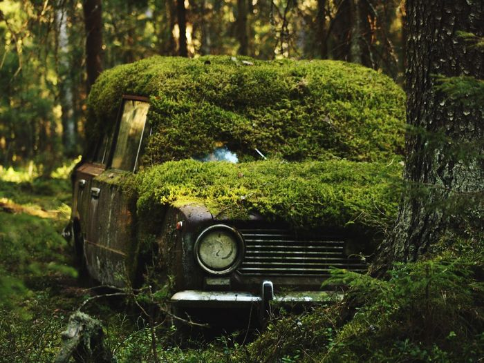 Moss covered abandoned car in forest