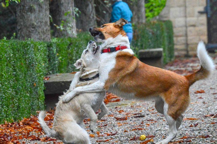 Brothers😍 Zowie Zowieyzen Zen Dogs Dogs Of EyeEm Dogslife Dogstagram Animal Picoftheday Friki Pets Dog Sitting