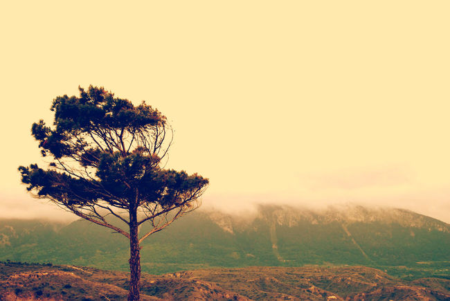 Beauty In Nature Drzewo Landscape Lone Nature Outdoors Solitude Tranquil Scene Tree Wiatr Wind Melancholic Landscapes EyeEmNewHere The Great Outdoors - 2017 EyeEm Awards