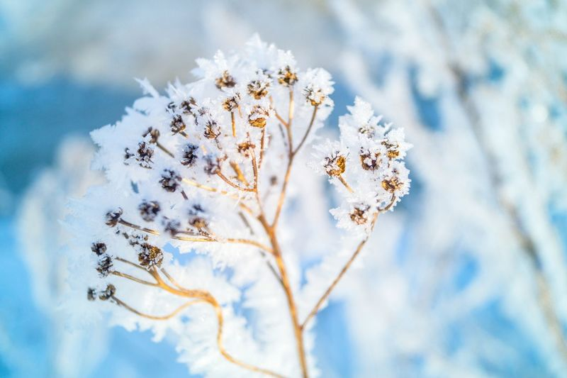 Frozen plant Frozen Snow Cold Temperature Plant Flowering Plant Winter Nature Fragility Flower Beauty In Nature No People Close-up Vulnerability  Tree Day White Color Blossom Frozen Outdoors Sunlight Springtime