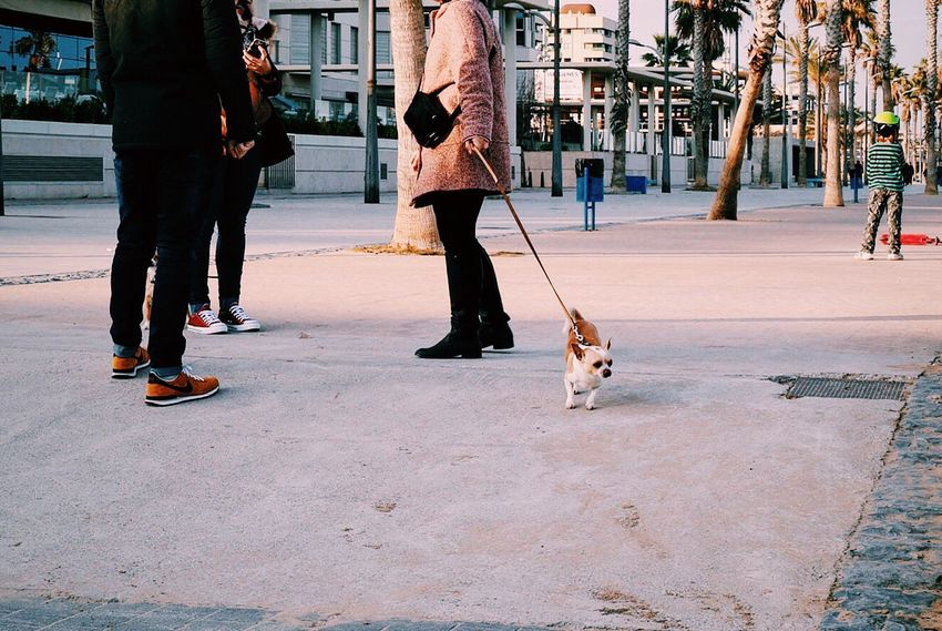 Dog Dogs ScenesFromTheStreet Street Showcase: February Scene Outdoors Streetphotography Minimalism Palm Trees Low Section Legs People Animal Funny Casual Clothing Street Life Dogwalk Dog Life Street Photography Simplicity Floor Capture The Moment Small Dog Walking