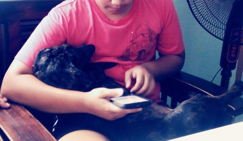 Pet Portraits a napping dog