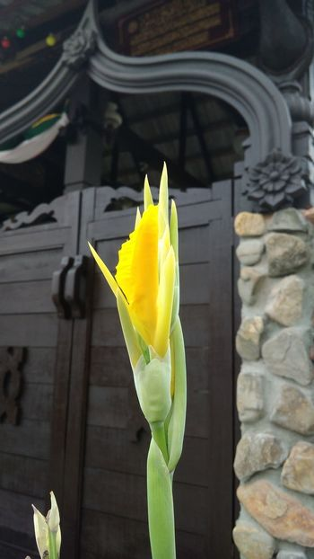 #EyeEmNewHere #EyeEm Nature Lover #closeupshot Flower Head Flower Yellow Blooming Plant Life In Bloom Blossom