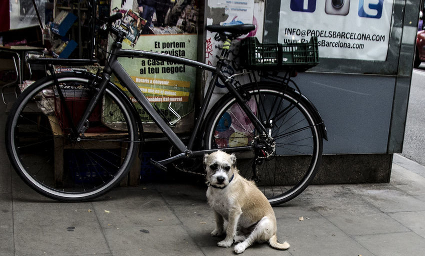 Side view of dog on bicycle