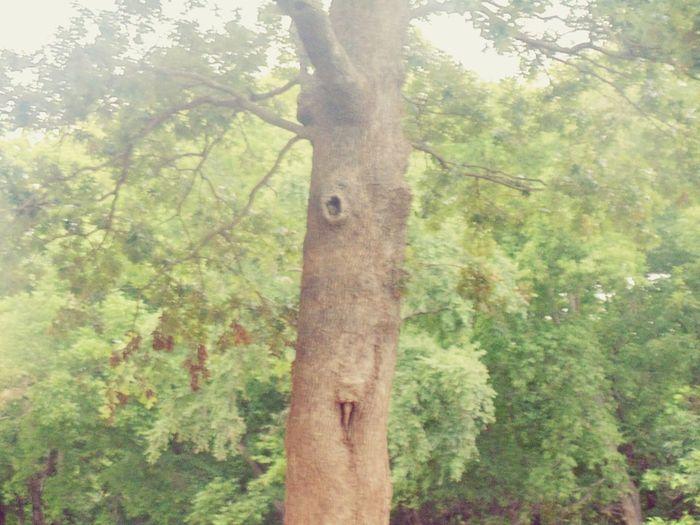 Bashful TreePorn