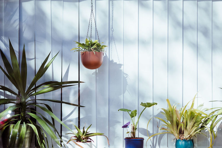 Potted Plants Against Wooden Wall