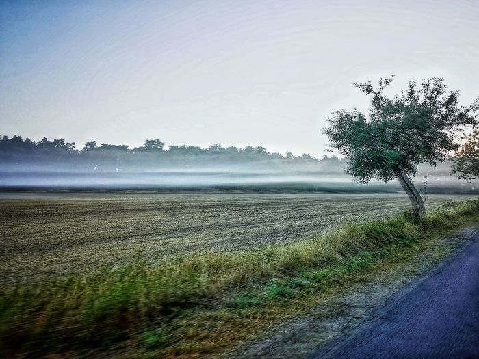 The foggy morning Eyemphotography Eyem Best Shots Bycicle Cycling Sunrise Morning Light Morning Light Water Tree Rural Scene Agriculture Irrigation Equipment Field Sky Landscape Cultivated Land Farmland Agricultural Field Plantation Cultivated Farm Patchwork Landscape