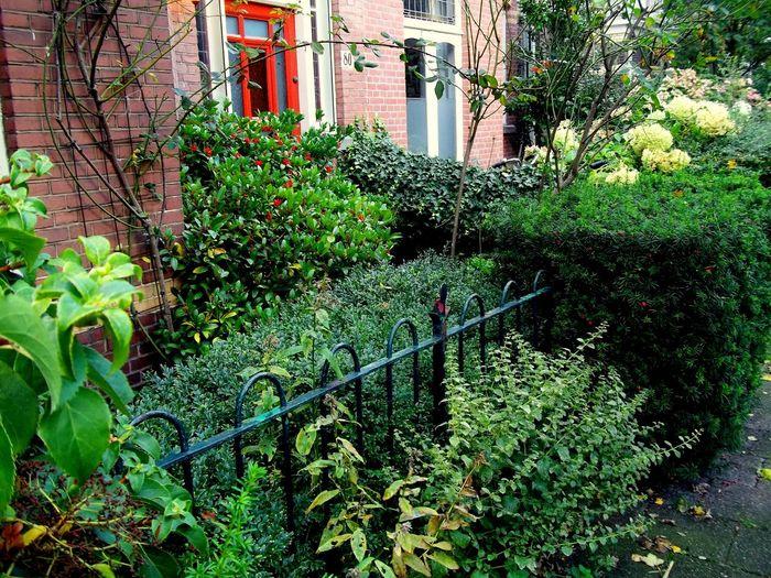 City Gardens Green Gardens