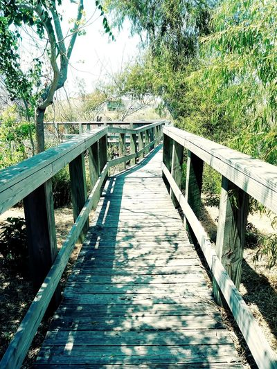 Boardwalk Premium Collection Wooden Post Wood - Material Wooden Walkway Wooden Planks Trees Wildlife & Nature Greenary Water Footbridge Bridge - Man Made Structure Wood - Material Railing Sunlight Architecture Built Structure Sky Bridge Long Boardwalk