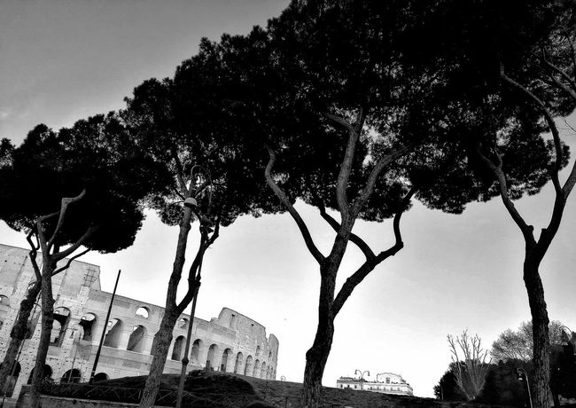 Eye4photography  EyeEmNewHere Rome Italy🇮🇹 Monochrome City Travel Travel Photography Colosseum Tree Silhouette Branch Sky Cityscape Skyline Moving Around Rome