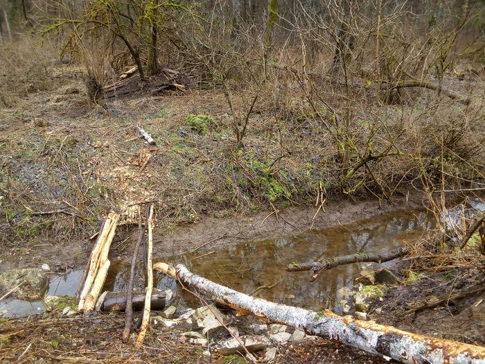 Biber Nature Outdoors Bibers Arbeit Flussufer Biberkunst Biber's Werk Beaver Beaver Work Bqaquaris Bq