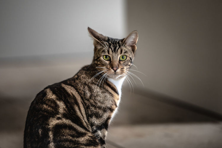 In search of adventure Cat Domestic Pets Mammal Domestic Animals One Animal Feline Domestic Cat No People Whisker Vertebrate Tabby Portrait Focus On Foreground Close-up Looking At Camera Indoors  Tabby Cat Katze Animal Animals Katzenfoto Haustier Haustiere