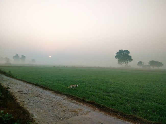 Nature Beauty In Nature Fog Tree Tranquility No People Agriculture Sky Landscape Outdoors Day Beautiful Nature Brautiful View Green Green Nature Green Green Green!  People Watching Farm Photos Nature Beauty In Nature
