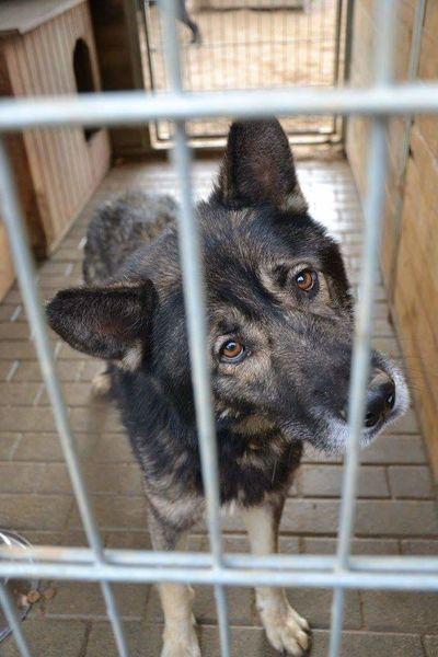 Borys 🐕💜 Dog Photography Dog Photography Schronisko Do Adopcji Poland Ostrów Wielkopolski Love Wolf Bestfriend Bestdogmodel Bestdog  first eyeem photo