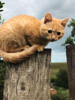 Animal Animal Themes Mammal One Animal Pets Vertebrate Domestic Cat Feline Domestic Animals Wood - Material Whisker Animal Wildlife Animal Body Part