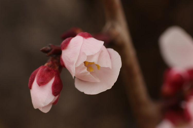 芽吹き Flower Head