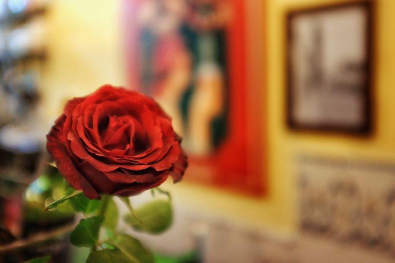 Rose @ El Porrón