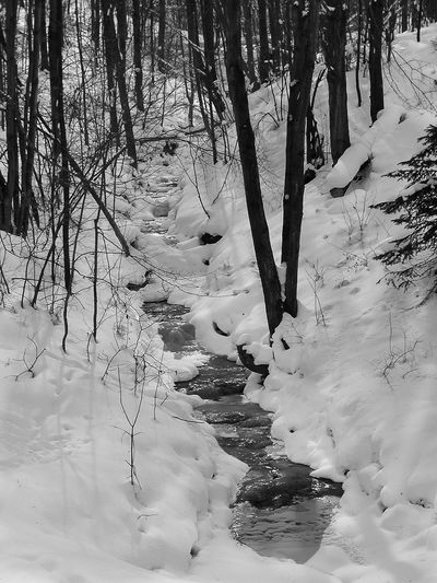 Ellicottville, NY Hanging Out Hello World Relaxing Taking Photos Bare Tree Beauty In Nature Blackandwhite Photography Cold Temperature Day Enjoying Life Frozen Landscape Nature No People Outdoors Plumb Ridge Scenics Snow Tranquil Scene Tranquility Tree Winter