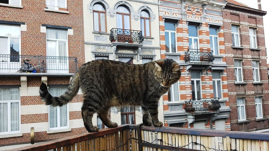 Grou. Cat Kitty Houses Houses And Windows Fassade Architektur Brussel Brussels Balcony Architecture Building Exterior Built Structure