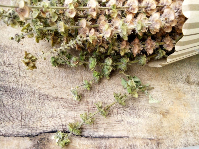 Dried lemon basil flowers Basil Browning Romantic Rustic Seeds Wood Close-up Day Dried Flowers Dried Plant Flowers Lemon Basil Nature No People Outdoors Plant Remember Wood - Material EyeEmNewHere