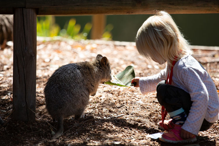 Child Childhood Vertebrate Mammal Real People One Person Casual Clothing Women Domestic Animals Girls Pets Domestic One Animal Lifestyles Day Livestock Feeding  Hair Care Outdoors Hairstyle Quokka Quokkalove Cutest Animals Marsupial