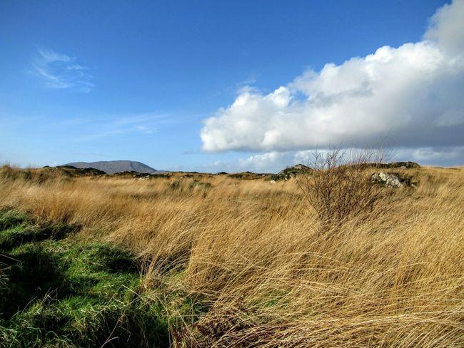 View across the bog Bogland Rushes Winter Landscape Landscapes With WhiteWall Blue Sky Mizen Peninsula West Cork Wildatlanticway Ireland