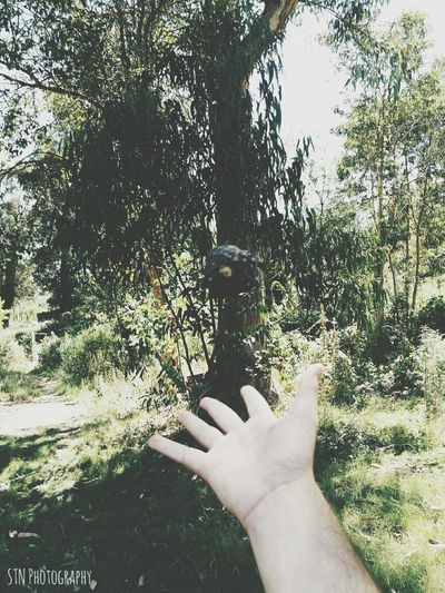 Human Hand Tree Personal Perspective Real People One Person Lifestyles Human Body Part Holding Human Finger Day Leisure Activity Nature Outdoors Beauty In Nature Sky Close-up One Man Only People