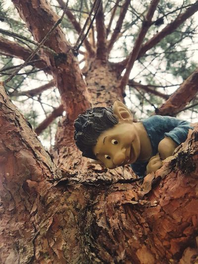 Toy Animal Home Toy Dwarf Garden Dwarf Pine Tree Curios  Curiosity Forest Lithuanianboy Blue Skirt Nose Tree Bark Tree Bark Texture Wood Tree Bark Close Up Funny Joke Boy In Forest Day Energy Aroma Tree Branch Childhood Forest Baby Close-up Babyhood