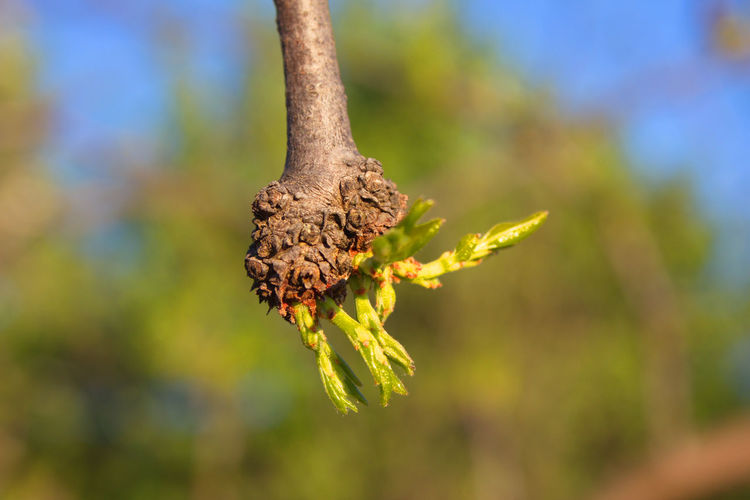 Close-Up Of Plant Growing On Branch