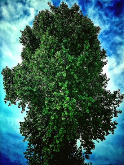 A Beautiful Tree Betterlandscapes EyeEm Selects Cloudy Clouds Tree Trees Eye4photography  Cloud Treetop Green Single Tree Silhouette