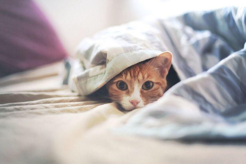 Curry Cat Cat 밤마다 아빠를 못괴롭혀 안달이 나있는 카레입니다ㅠㅠ