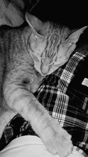 Sleeping cat with tech!Monochrome Photography