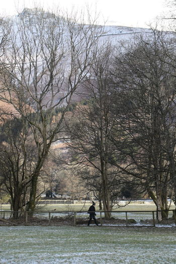 Cumbria England UK Grassmere Hiking Lake District Bare Tree Beauty In Nature Branch Cold Temperature Full Length Leisure Activity Lifestyles Men Nature One Person Outdoors Park - Man Made Space People Real People Sky Snow Tranquility Tree Walking Warm Clothing Winter
