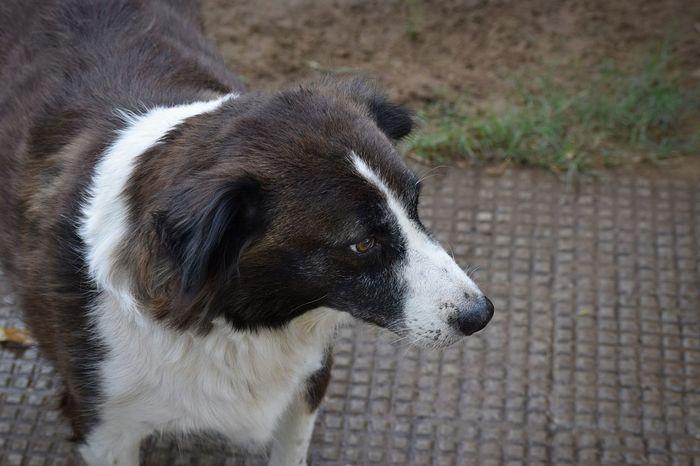 My Dog Dog Photography Dog Dog❤ Dog Expression