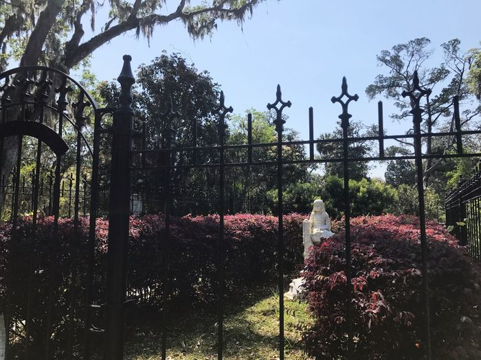 Tree Growth Day No People Outdoors Nature Beauty In Nature Sky Flower Cemetery Grave Graveyard Savannah Bonadventure Southern Life