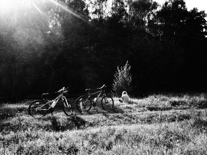 Tree Bicycle