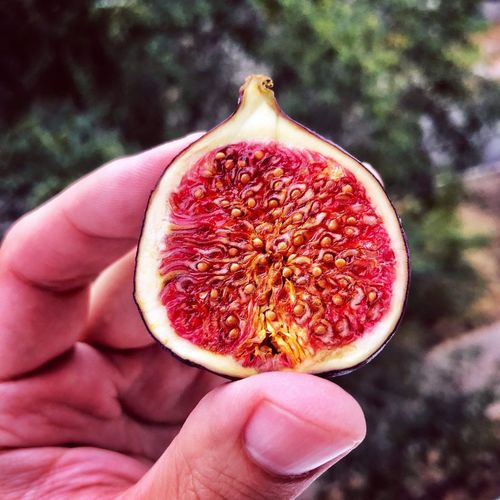 Fig Fig Human Hand Hand Holding Human Body Part Food And Drink Food Healthy Eating Fruit Close-up Seed