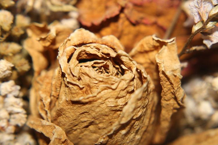 macro dried