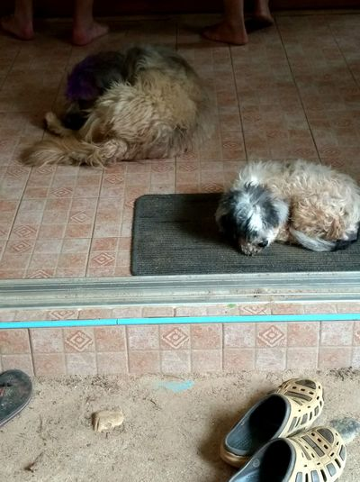 Dogs ASIA Dog #poverty #Thailand Pets Indoors  Domestic Animals One Animal Animal Themes Dog Mammal High Angle View No People