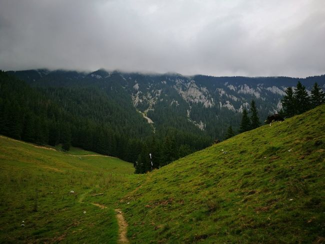 Zarnesti Tranquility Beauty In Nature Mountain Range Mountain